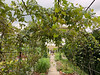 Grape arbor, veg garden MofSV
