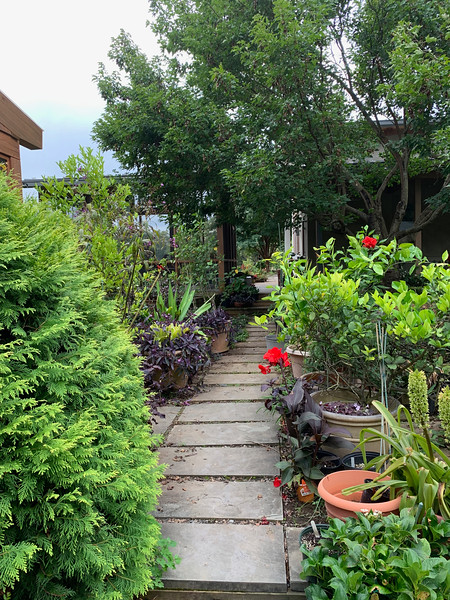 Diebold path from d'way past g'house on L to side veranda