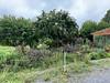 Diebold house garden, seen from driveway