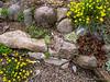 Donald LaFond's Garden (76 of 94)