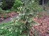 Donald LaFond's Garden (85 of 94)