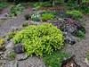 Donald LaFond's Garden (65 of 94)