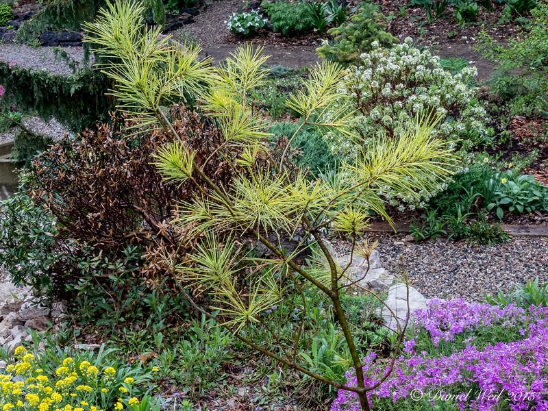 Donald LaFond's Garden (69 of 94)