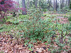 Donald LaFond's Garden (36 of 94)