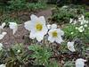 Donald LaFond's Garden (72 of 94)