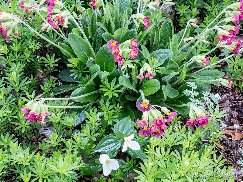 Donald LaFond's Garden (49 of 94)