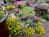 Donald LaFond's Garden (75 of 94)
