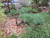 Donald LaFond's Garden (32 of 94)