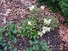 Donald LaFond's Garden (37 of 94)