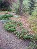 Donald LaFond's Garden (33 of 94)