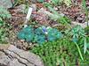 Donald LaFond's Garden (45 of 94)