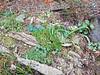 Donald LaFond's Garden (44 of 94)