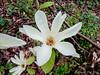 Donald LaFond's Garden (62 of 94)