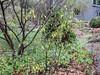 Donald LaFond's Garden (60 of 94)