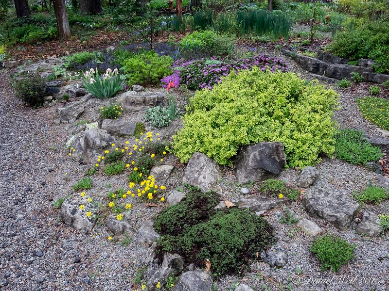 Donald LaFond's Garden (70 of 94)