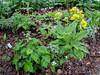 Donald LaFond's Garden (89 of 94)