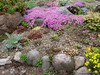 Donald LaFond's Garden (78 of 94)