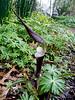 Donald LaFond's Garden (55 of 94)