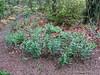 Donald LaFond's Garden (83 of 94)