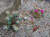 Donald LaFond's Garden (67 of 94)