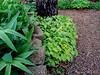 Donald LaFond's Garden (86 of 94)