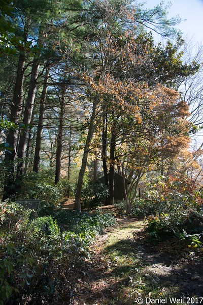 Camellias, mahonias and rhododendrons under trees