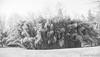 Phyllostachys nuda, overqall bamboo grove