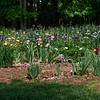 Stock Garden for draycottgardens.com