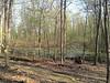 Eberwhite Woods, Ann Arbor,  (43 of 49)