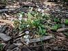 Eberwhite Woods, Ann Arbor,  (3 of 49)