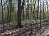 Eberwhite Woods, Ann Arbor,  (44 of 49)