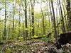 Eberwhite Woods, Ann Arbor,  (9 of 49)