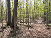 Eberwhite Woods, Ann Arbor,  (5 of 49)