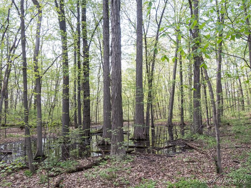 Eberwhite Woods, Ann Arbor,  (22 of 49)