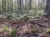 Eberwhite Woods, Ann Arbor,  (45 of 49)