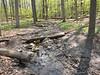 Eberwhite Woods, Ann Arbor,  (6 of 49)