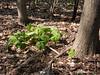 Eberwhite Woods, Ann Arbor,  (4 of 49)