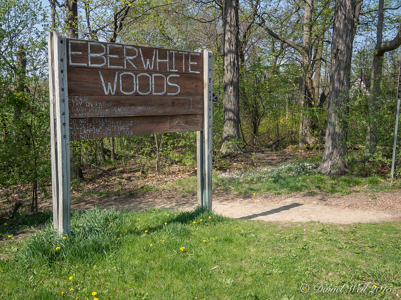 Eberwhite Woods, Ann Arbor,  (1 of 49)