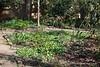 Ranunculus ficaria and primulas