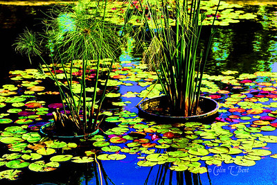 Purple Pond