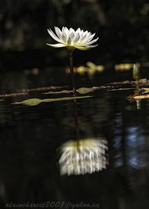 White reflexion