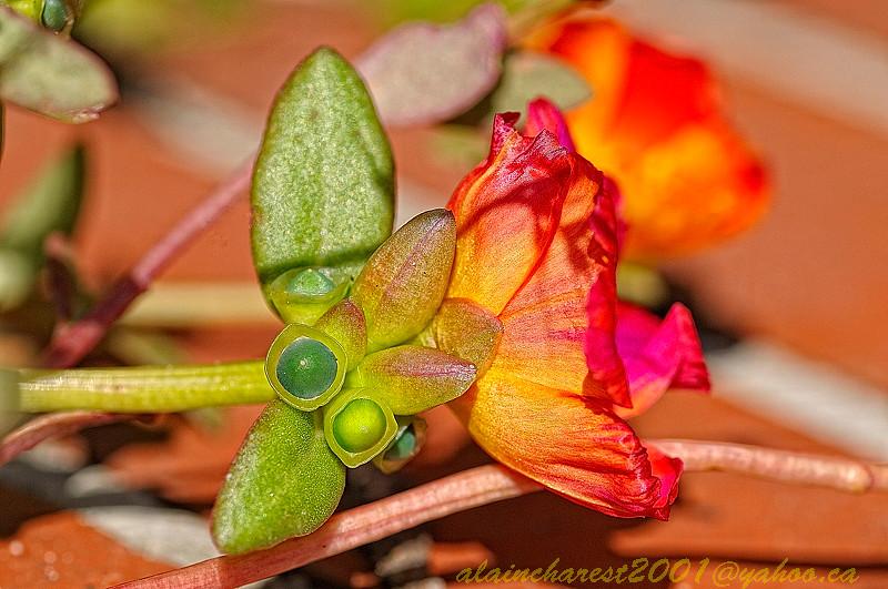 Flower at the garden