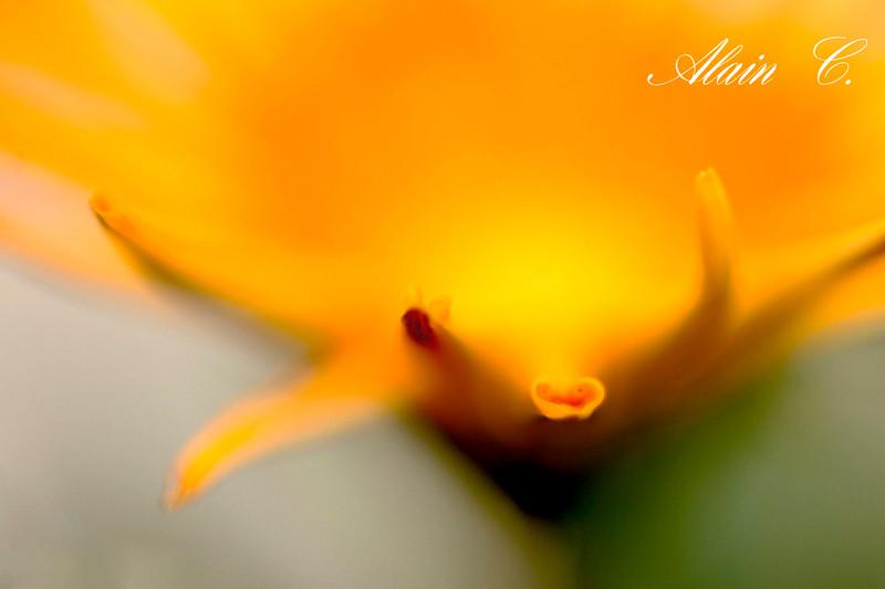 Brume jaune
