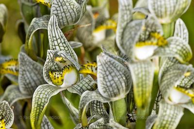 Patagonia Botanical Tour