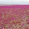 Coastal Atacama Desert
