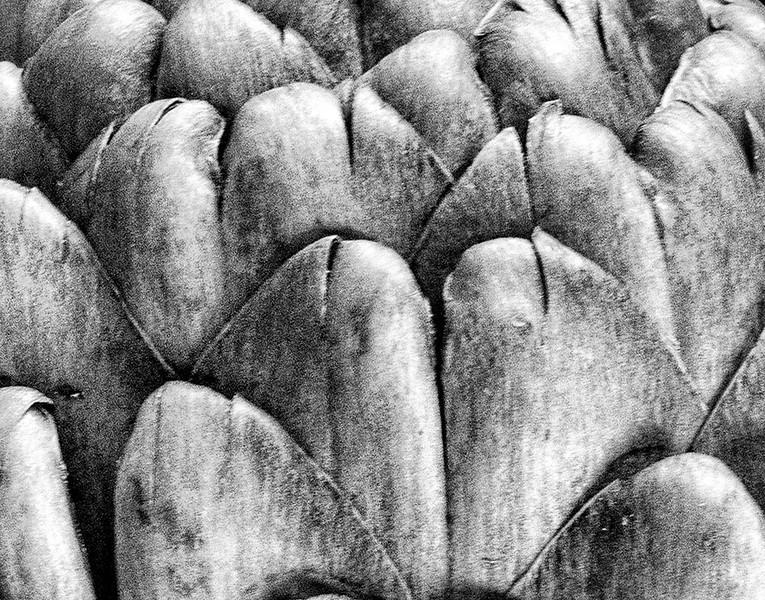 Artichoke Abstract
