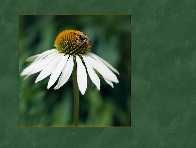 Bee's Delight