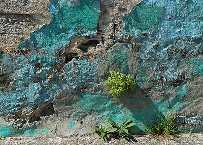 Détails d'un vieux mur et ses premiers végétaux / Details of an old wall with its first nature structures