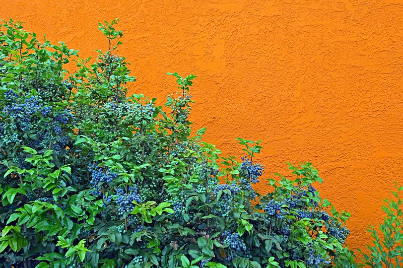 Santa Fe Colors