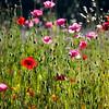 poppy field   palo alto, ca